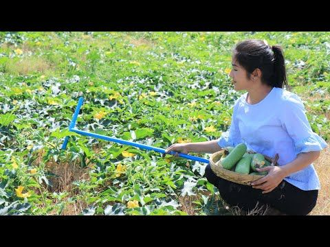 Winter Melon Farm In My Village / Easy & Simple Winter Melon Soup Recipe / By countryside life TV.