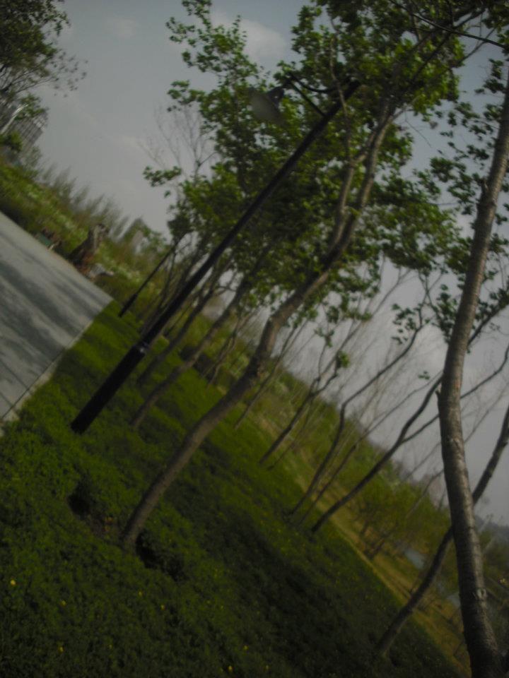 lilac park
