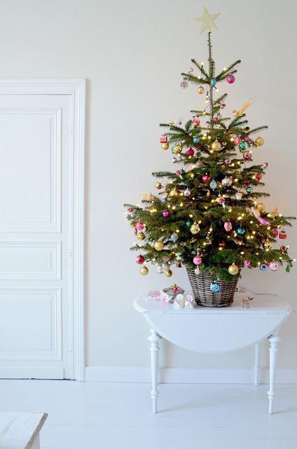 Christmas is here to stay Christmas tree, Holidays and Xmas