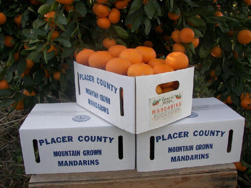 Sunset Ridge Mandarins Of Newcastle Ca U Pick Nov Jan 10 5 1 25lb Local Farm Placer County Mandarins
