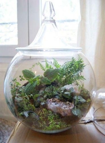 Un terrarium la touche d co pour les plantes dans la for Plante sous verre