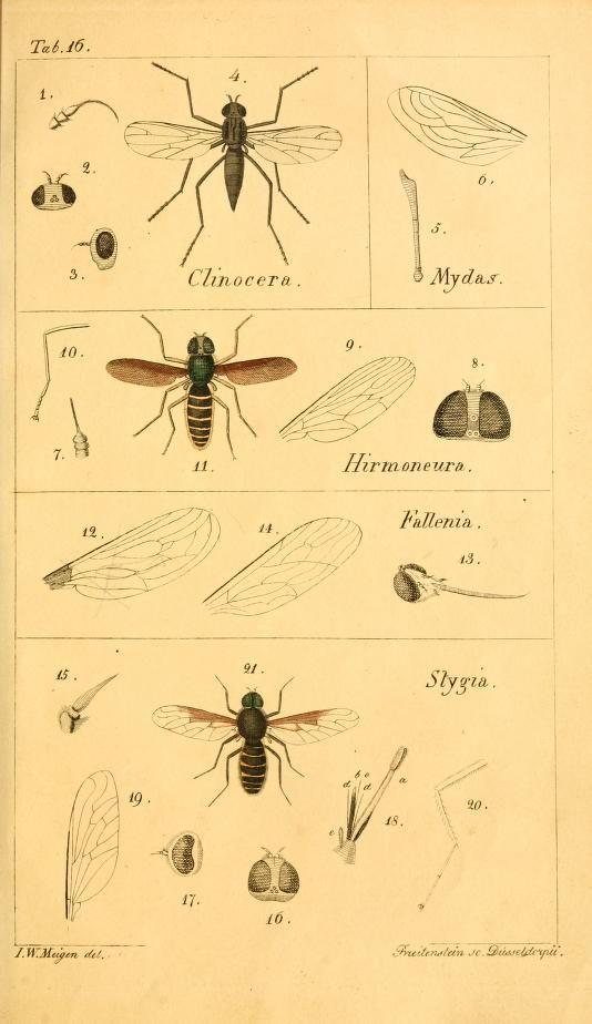 T. 2 - Systematische Beschreibung der bekannten europäischen zweiflügeligen Insekten / - Biodiversity Heritage Library