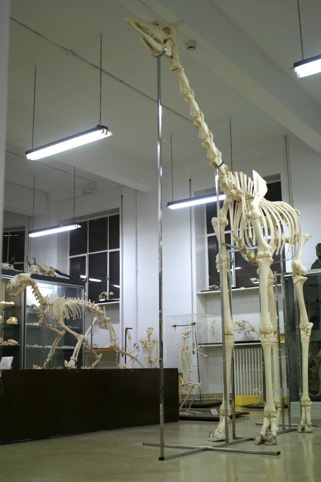 La sección de osteología cuenta con más de 500 cráneos y 200 ...