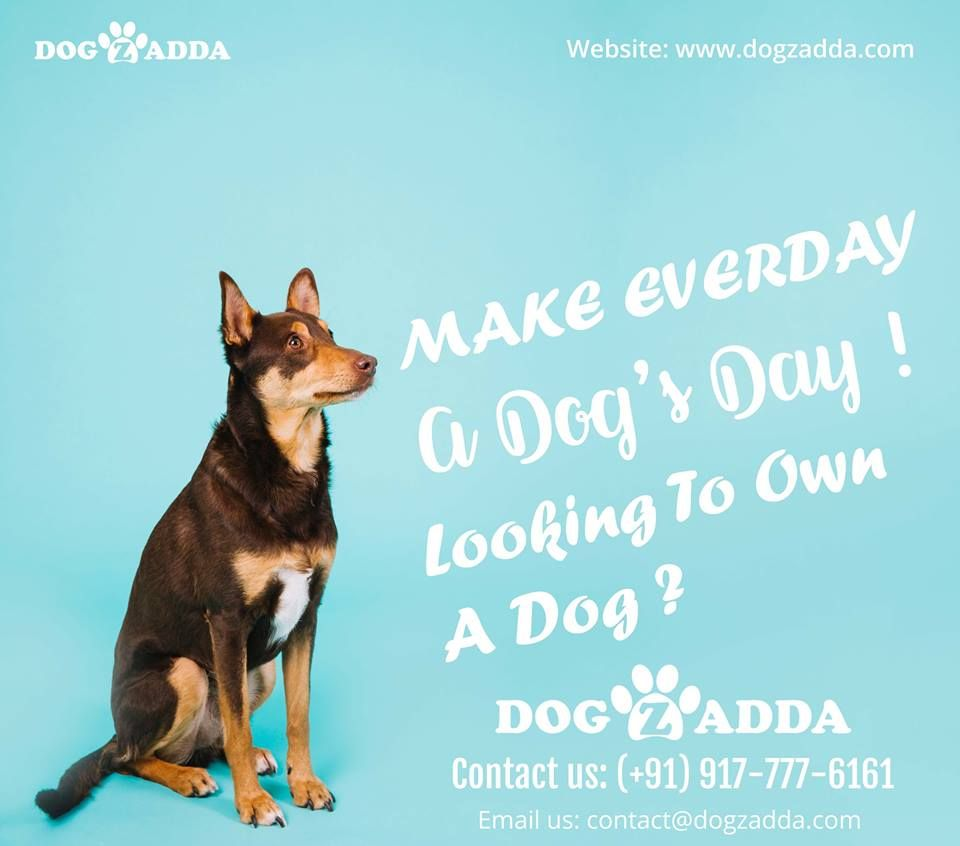 An Elite Destination For The Pet Buying Pet Service In Hyderabad