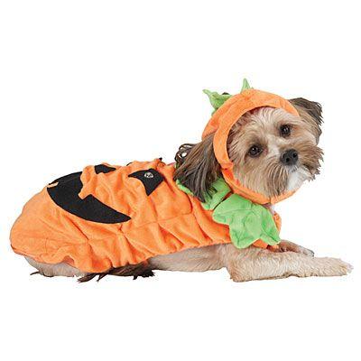 Halloween Pet Costumes At Big Lots Pet Halloween Costumes