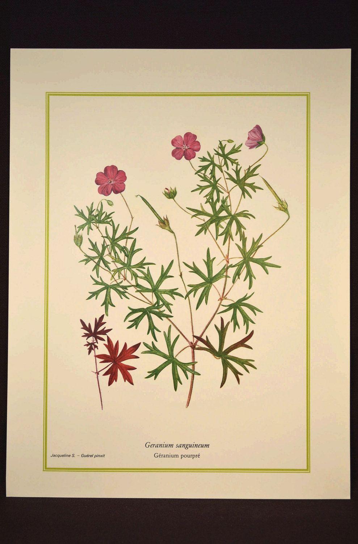 Wild Flower Print Nature Wall Decor Botanical Art Fuschia | Wall ...