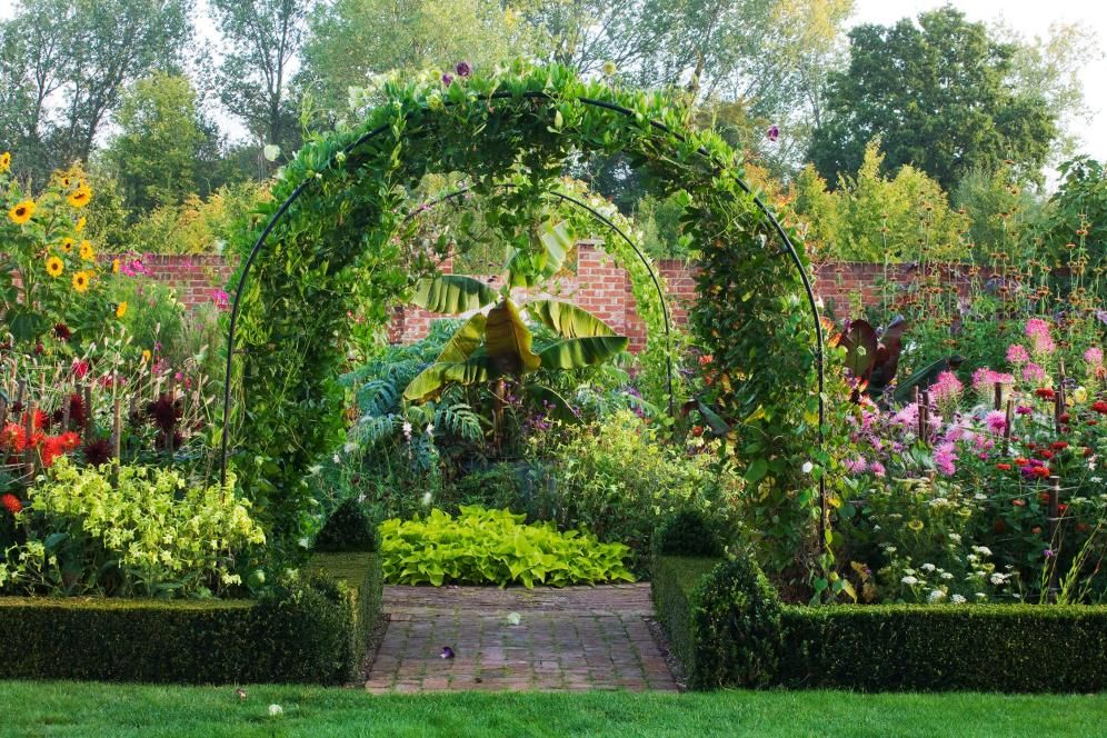 Everything you need to know about climbing plants   Home   The Times & The Sunday Times