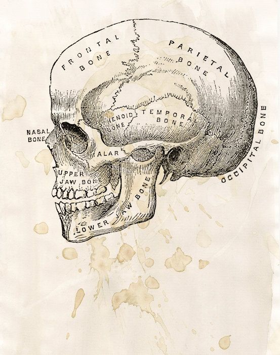 Pin de Luca Donari en // - )   Pinterest   Biología, Anatomía y El ...