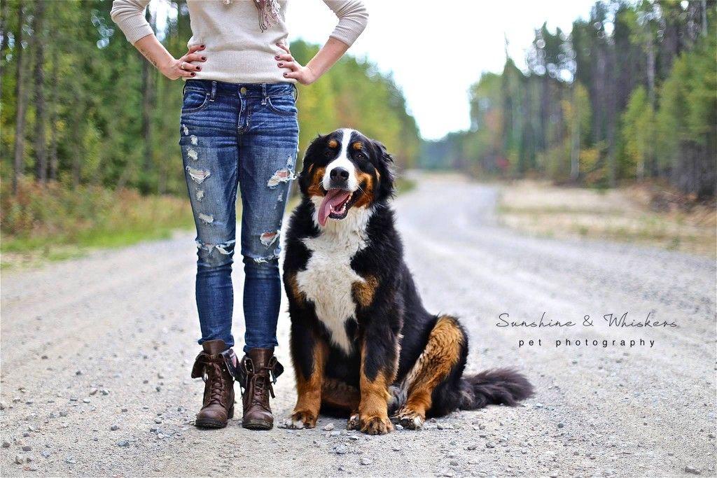 Bernese Mountain Dog And Owner Dog Photography Dog Photos