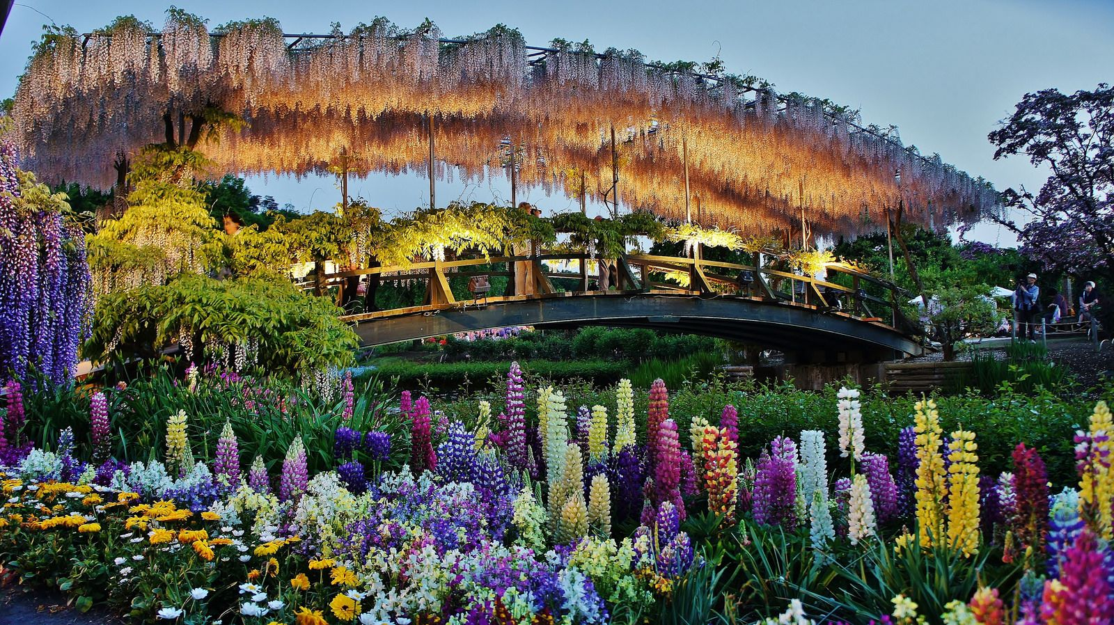Ashikaga Flower Park Beautiful Flowers Garden Day Trips From Tokyo Ashikaga