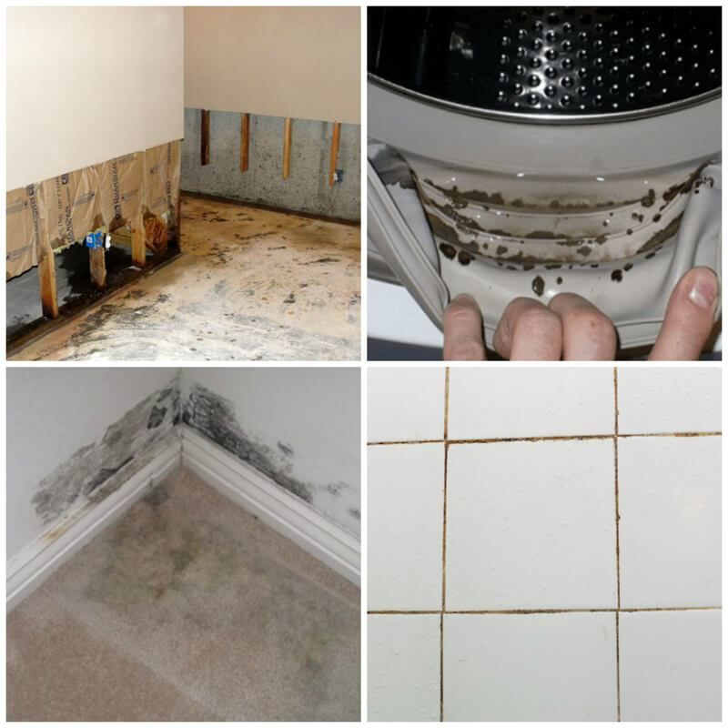 13 Diy Ways To Get Rid Of House Mold Including Black