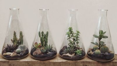 kenmarten:  More Lab Flask Terrariums