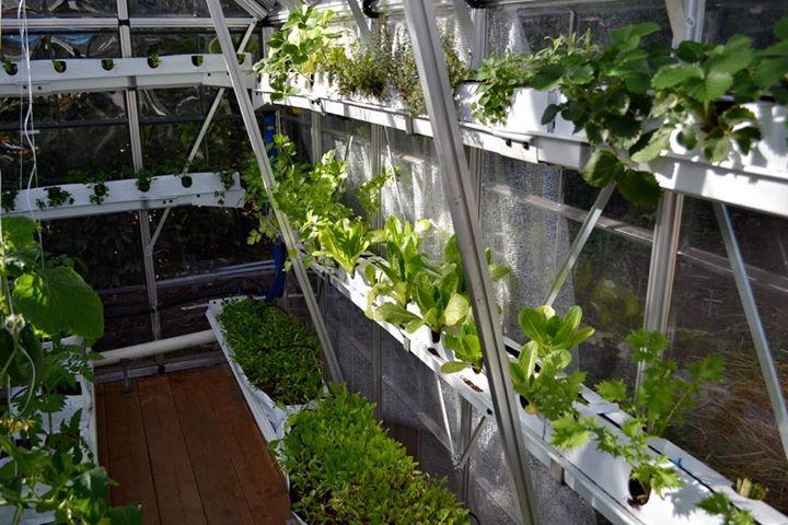 sistema hidropnico en invernadero