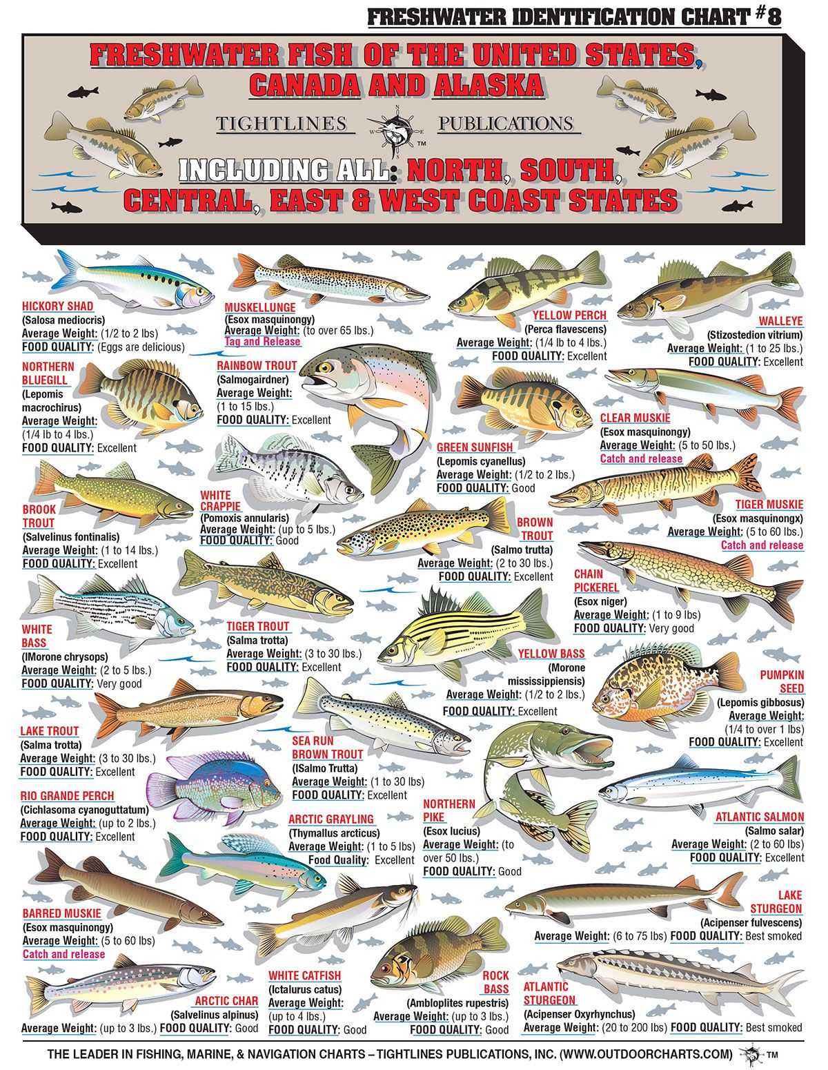 How To Identify Freshwater Species Shad Perch Walleye Bluegill Crappie Trout And Bass The Best Charts For Freshwa Fish Chart Fishing Tips Catching Fish