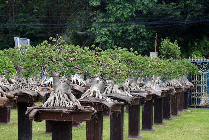 Image from http://3.bp.blogspot.com/-DdhlwnfqXdE/UGlVTfNZU7I/AAAAAAAADKE/JbLDkirmkTc/s1600/DSC_8032.JPG.