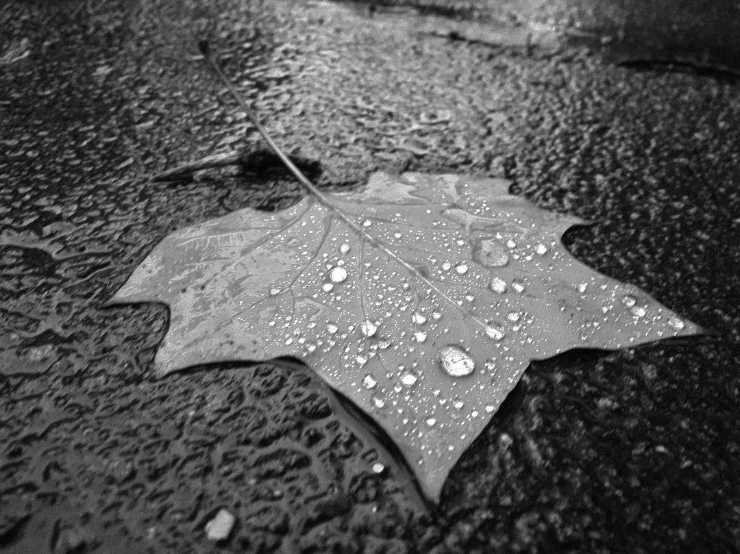 Leaf under