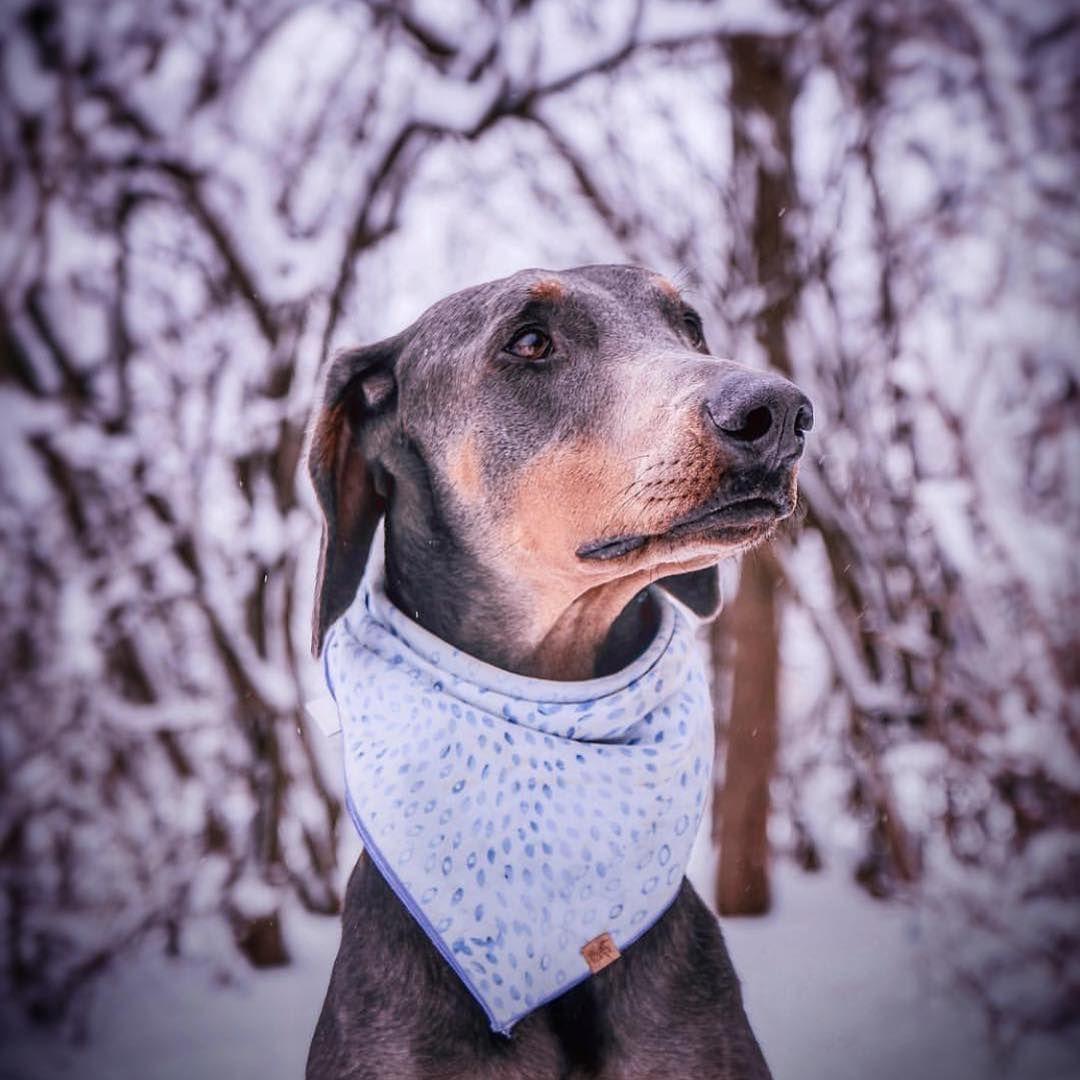 Easiest Dog Breed To House Train Dobermanpinscher Housetrain