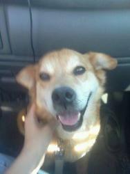 Newmexico Adopt Sonny A Senior Golden Retriever In Albuquerque
