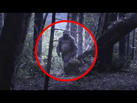 ATV Rider Spots Bigfoot With Baby on Logging Road ...