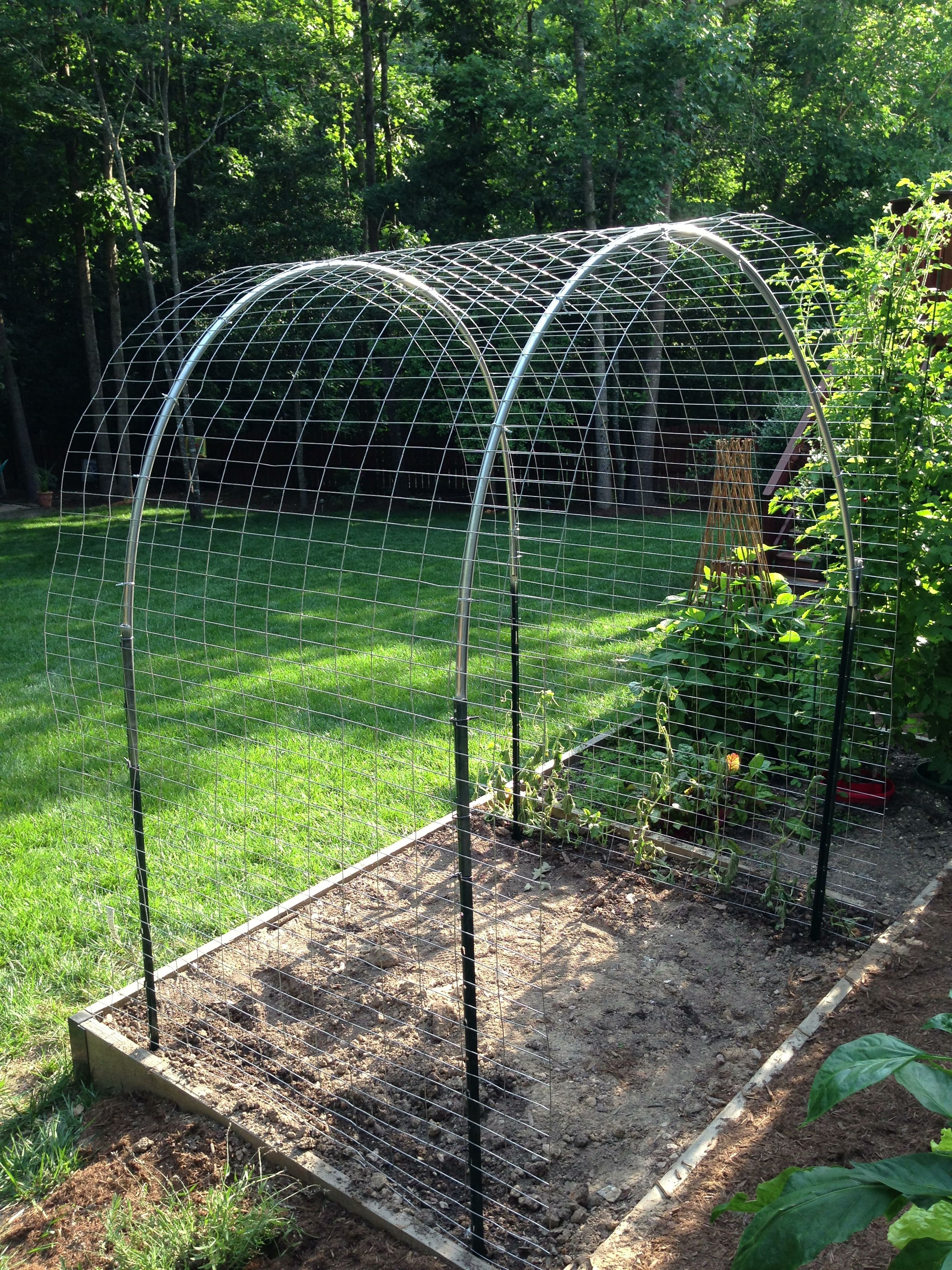 Arched Trellis For Cantaloupe Watermelon And Sugar