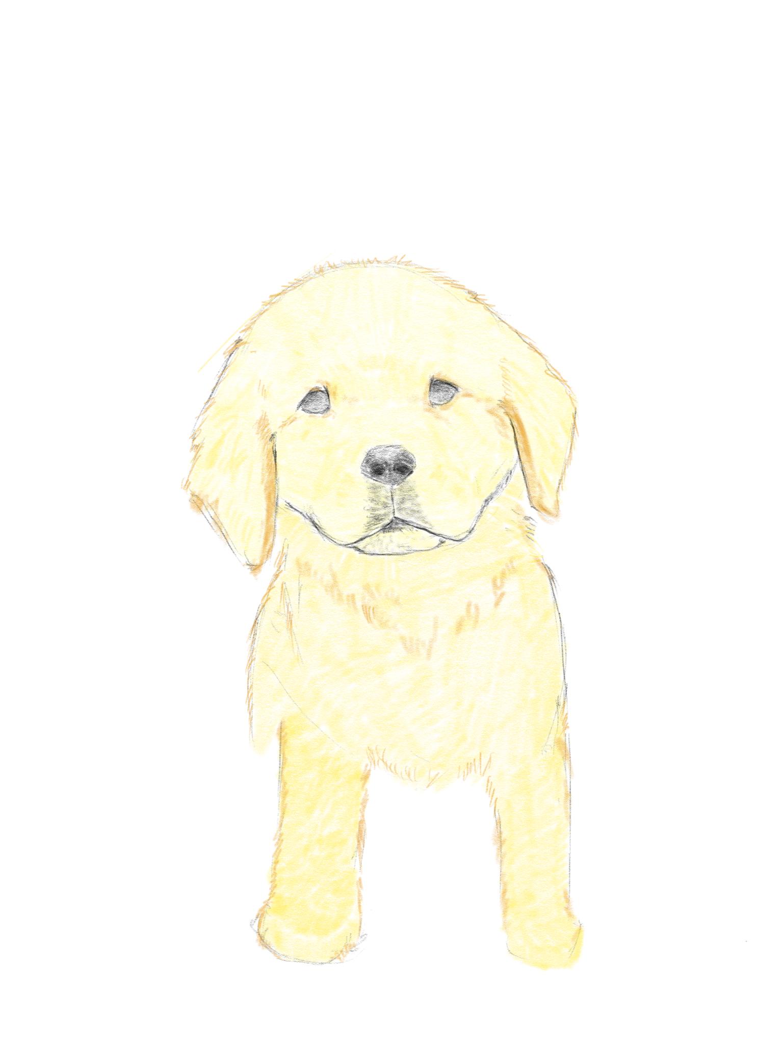 Pin By Johnson Wen On Dog Sketch Dog Sketch Teddy Bear Teddy