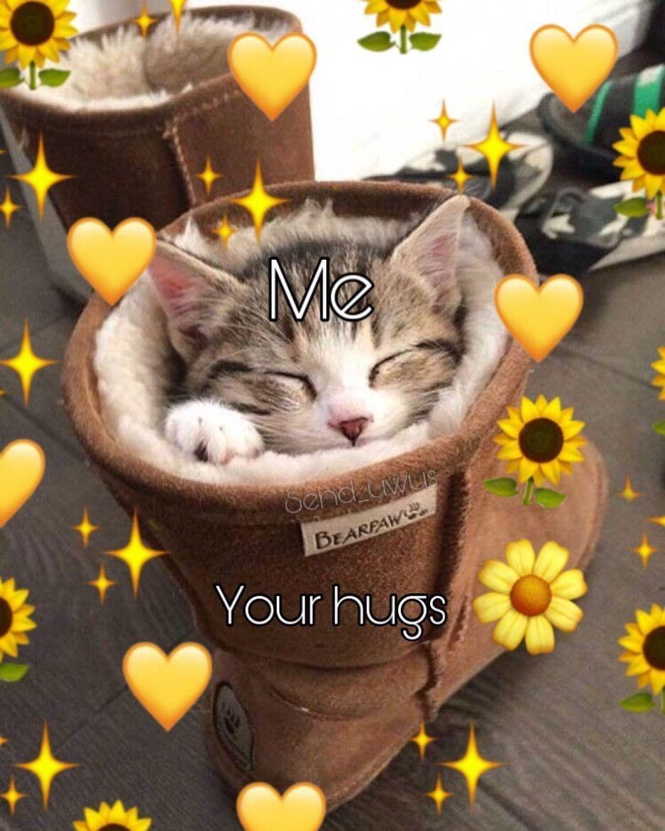 Cat Hearts Meme : hearts, Posting, Account, Having, Nice-🐢, #memes, #meme, Memes,, Memes