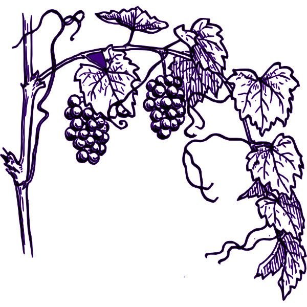 purple grape vine clip art liked on polyvore all things beauty rh pinterest com grapevine clip art borders free grape vine clip art free
