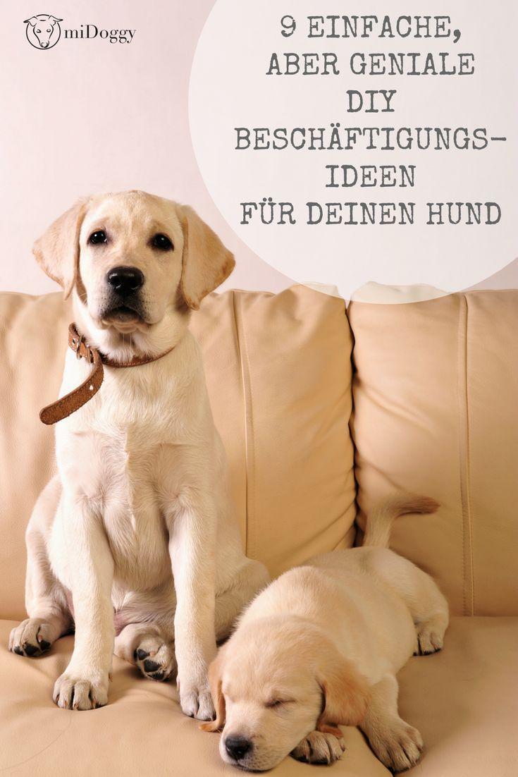 diy besch ftigung hund hunde auslastung. Black Bedroom Furniture Sets. Home Design Ideas