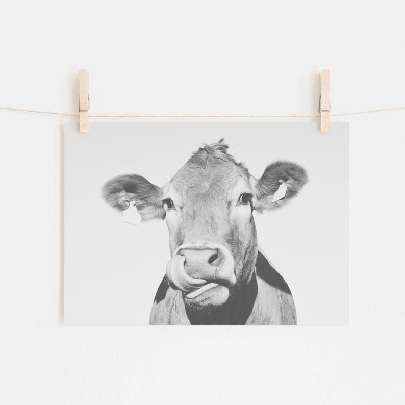 Cow Wall Art Funny Cow Print Rustic Home Decor Cattle Etsy In 2020 Cow Wall Art Cow Art Cow Photos
