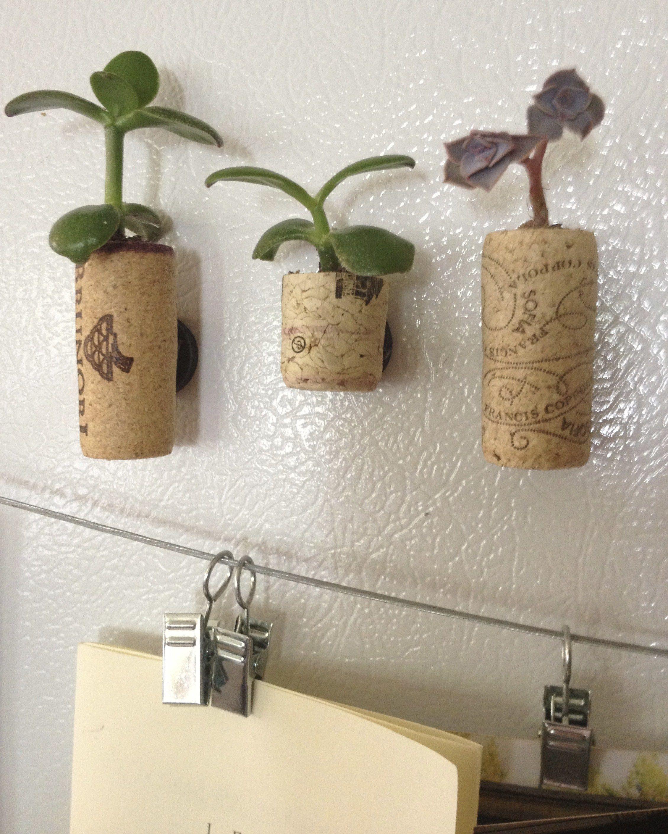 DIY magnetic cork succulent planters