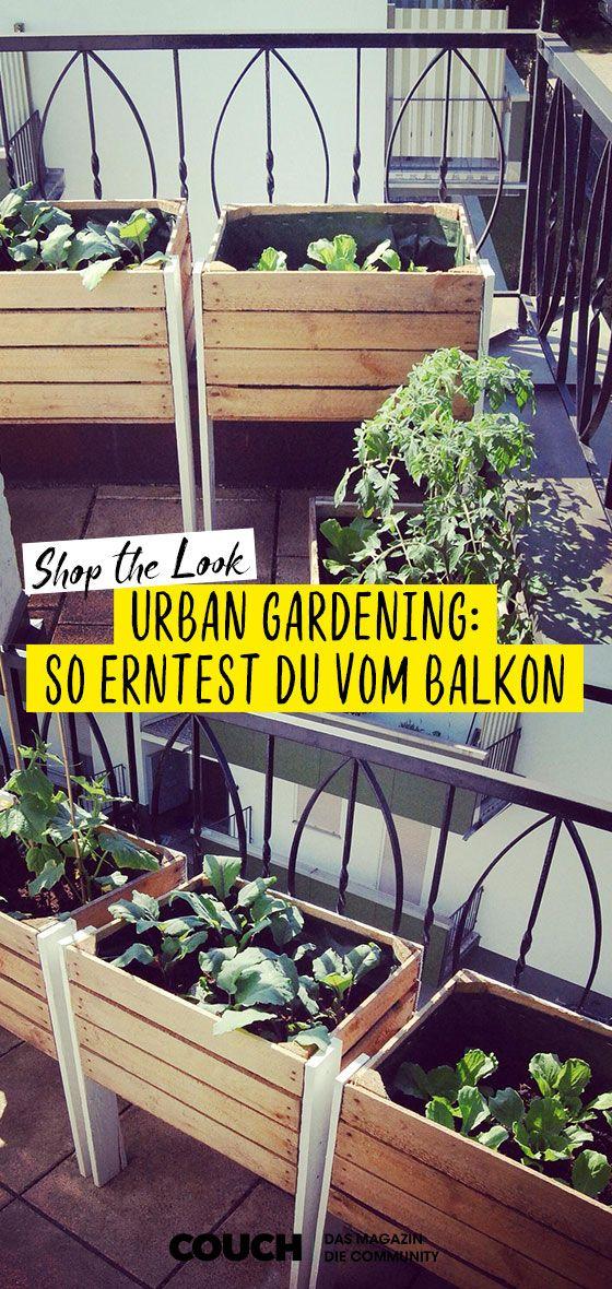 Urban Gardening – alles für die Ernte vom Balkon #howtogrowvegetables