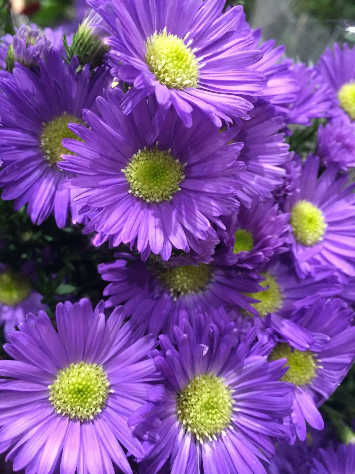 Pin On Echinacea Benefits