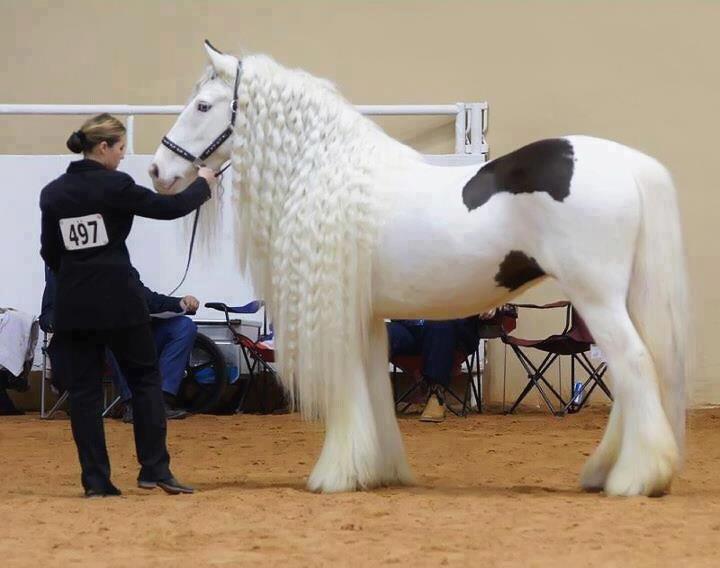 Long Hair Horse Most Beautiful Horses Horses Beautiful Horses