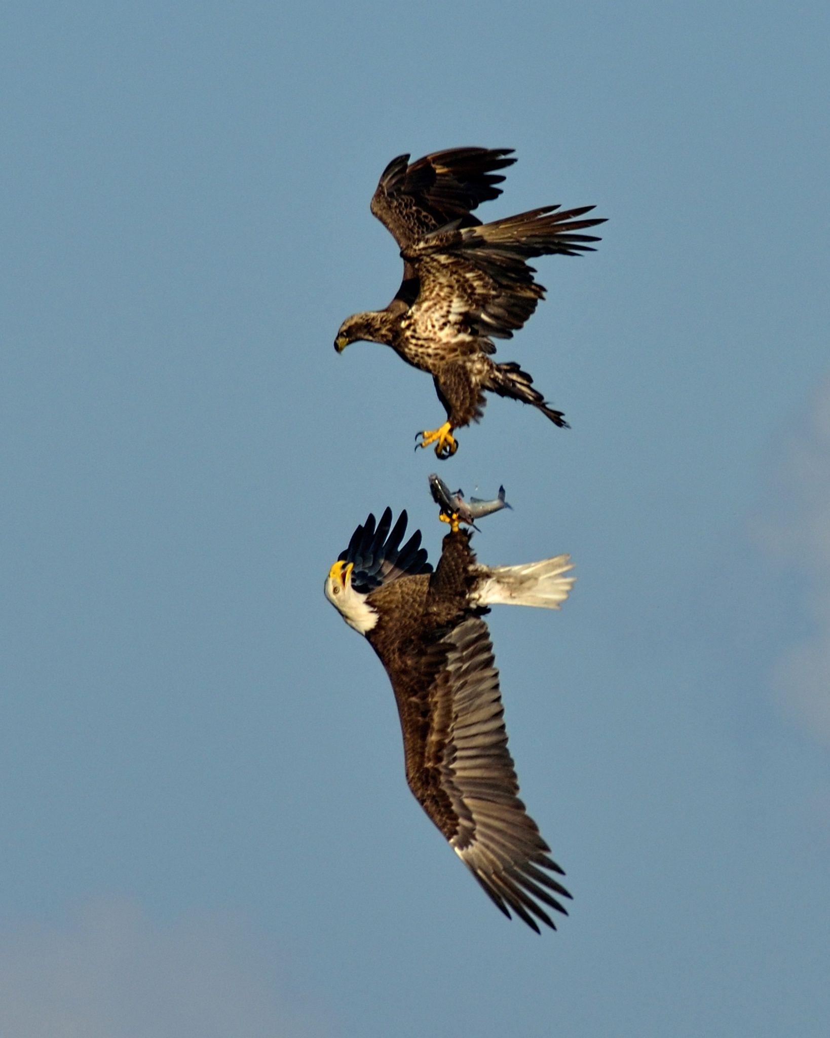 Photo Aerial Battle by Michael Parish on 500px