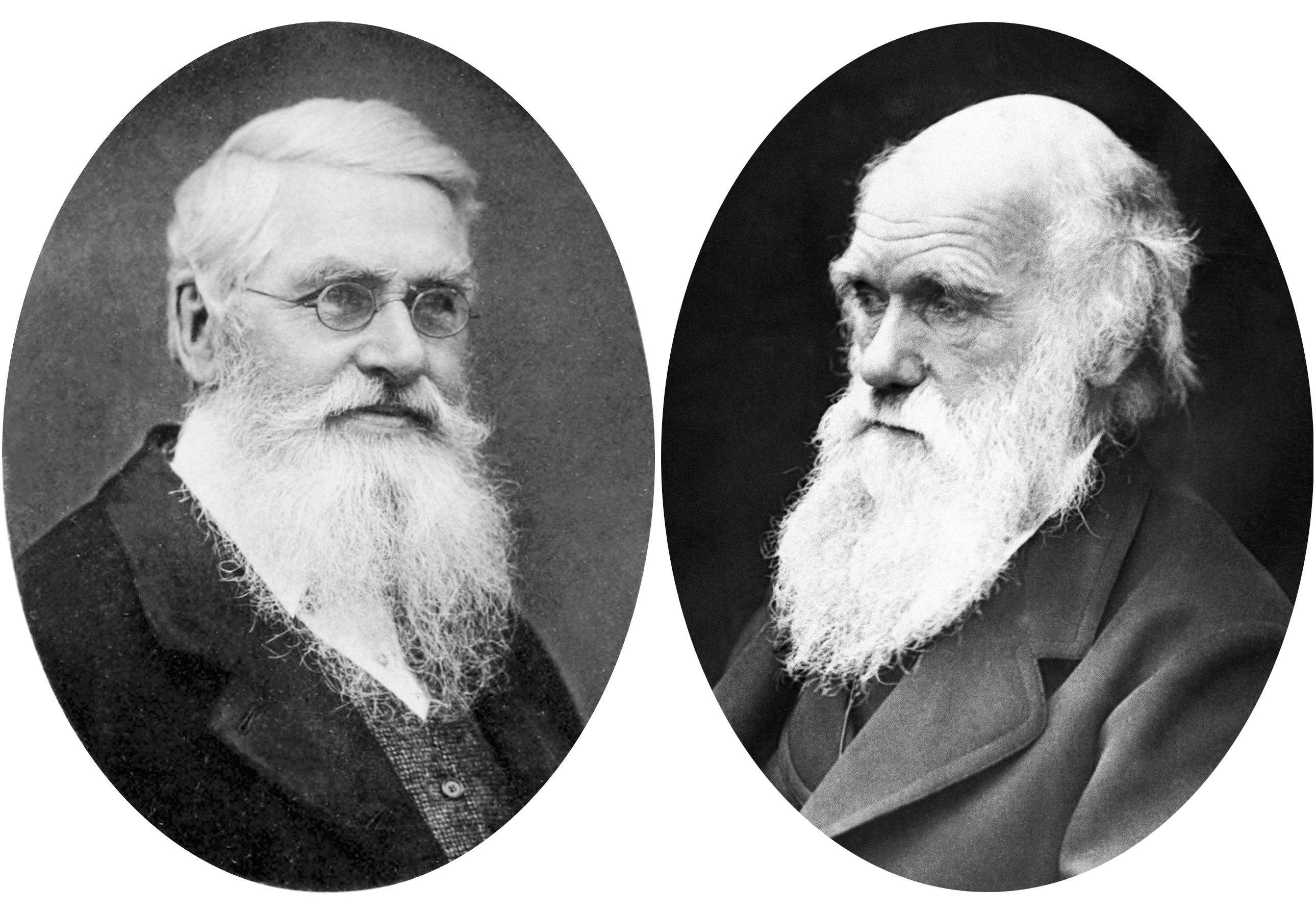 Freaking out Darwin | Charles darwin, Linguistic theory