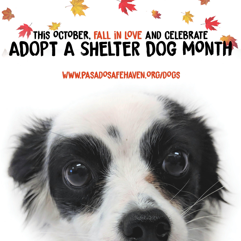 Pasado S Safe Haven Animal Sanctuary Adoption Promotion Adopt A Shelter Dog Month Shelter Dogs Animal Sanctuary Adoption