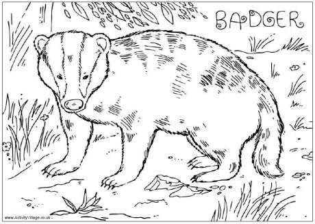 Badger Colouring Page Coloring Pages Bunny Coloring Pages Free