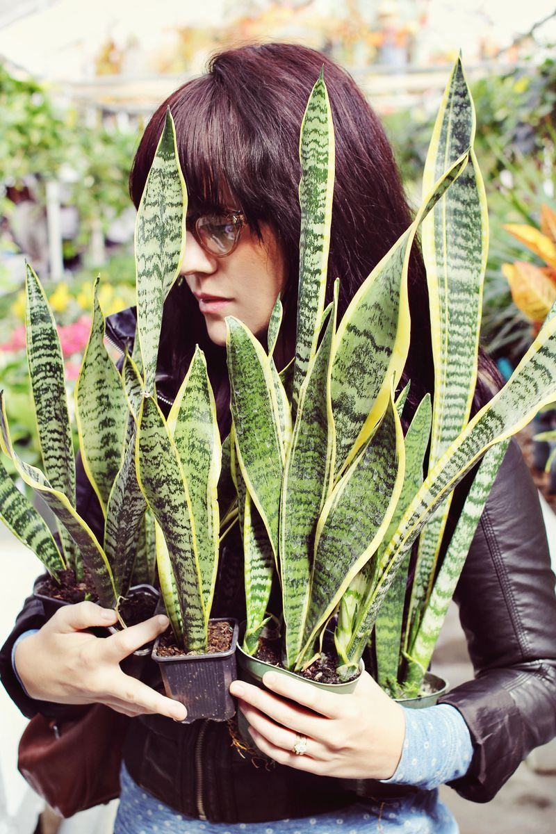 perfect office plants. \u0027Snake Plant\u0027. Sounds A Bit Sinister, But Definitely An Easy To Love Perfect Office Plants