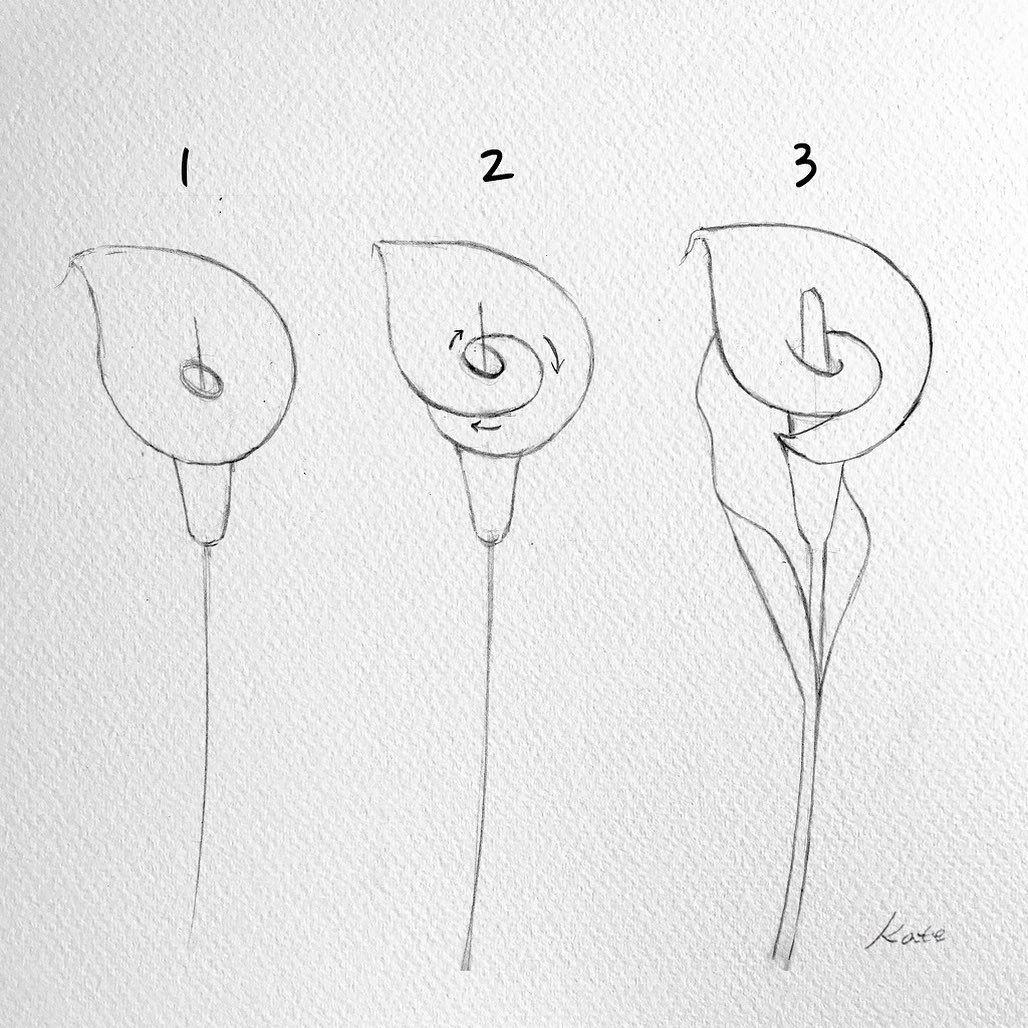 How to draw flowers Flower drawing tutorials, Sketches