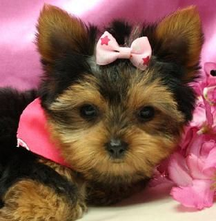 Maxies Babies Photo Gallery Cute Dog Photos Super Cute Animals Puppies