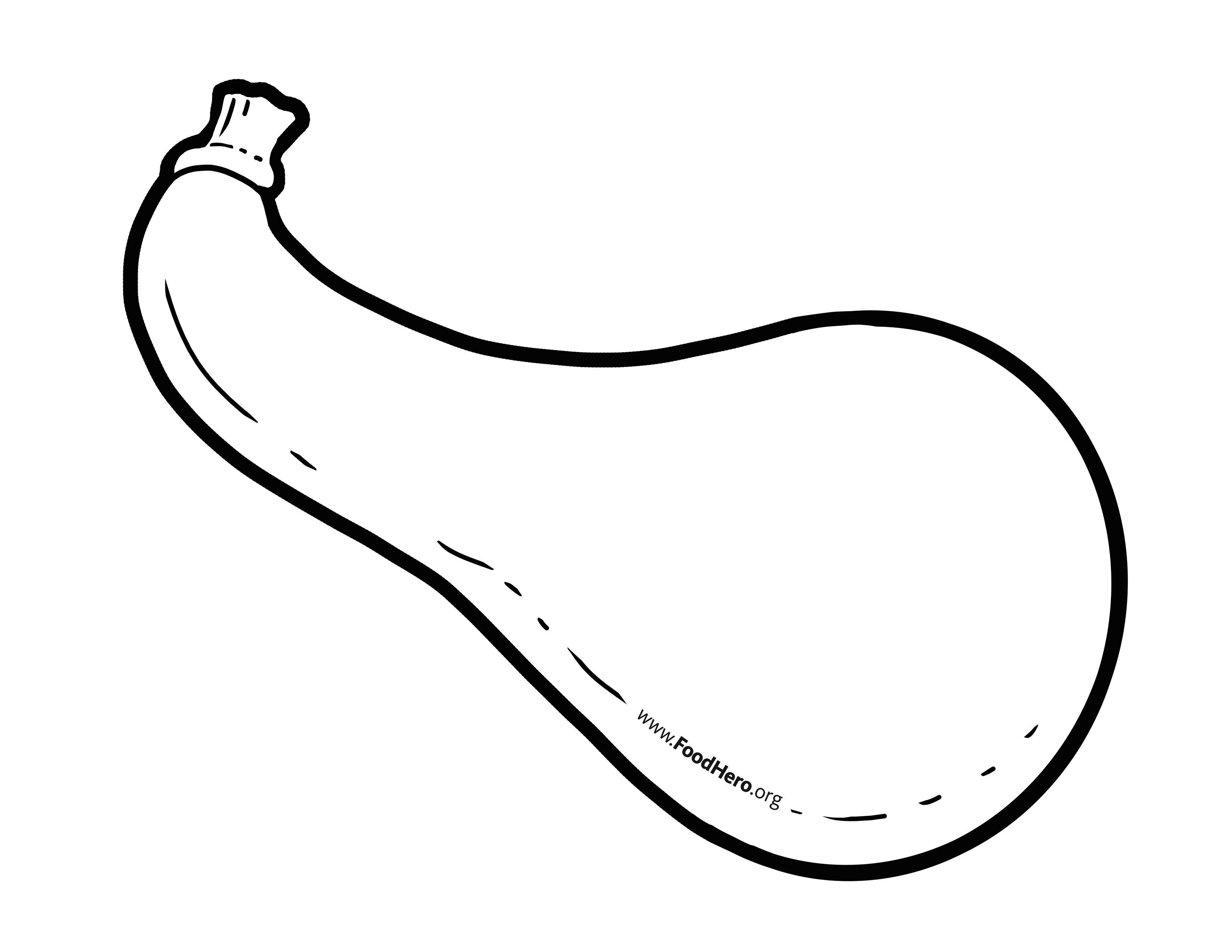 Summer Squash Illustration Foodhero Bullentinboards