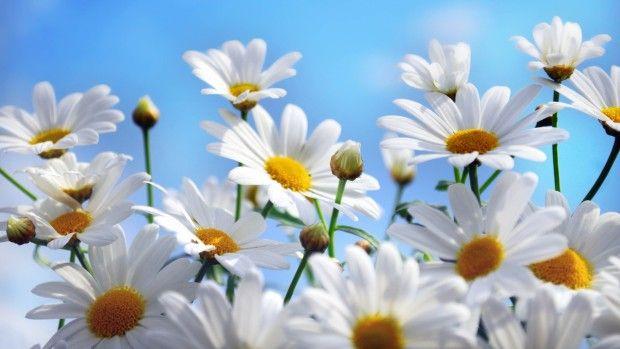 Summer Flowers Wallpaper HD