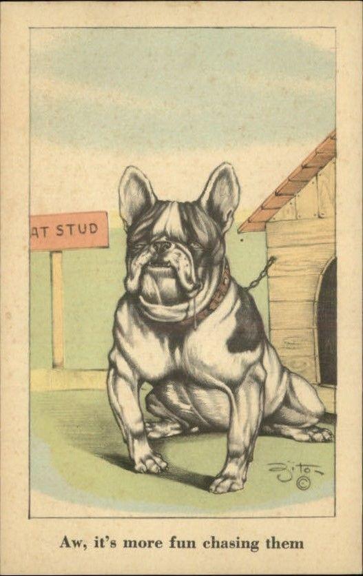 BULLDOG Dog 'At Stud' Outstanding Art ZITO Postcard