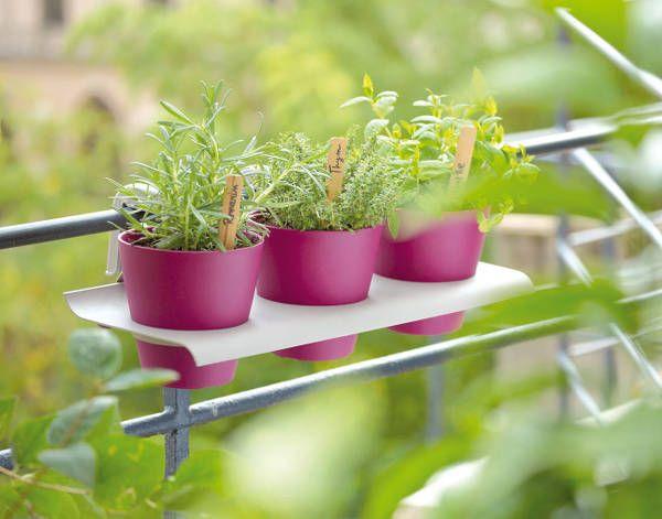 Cultiver des plantes aromatiques | Planter du persil ...