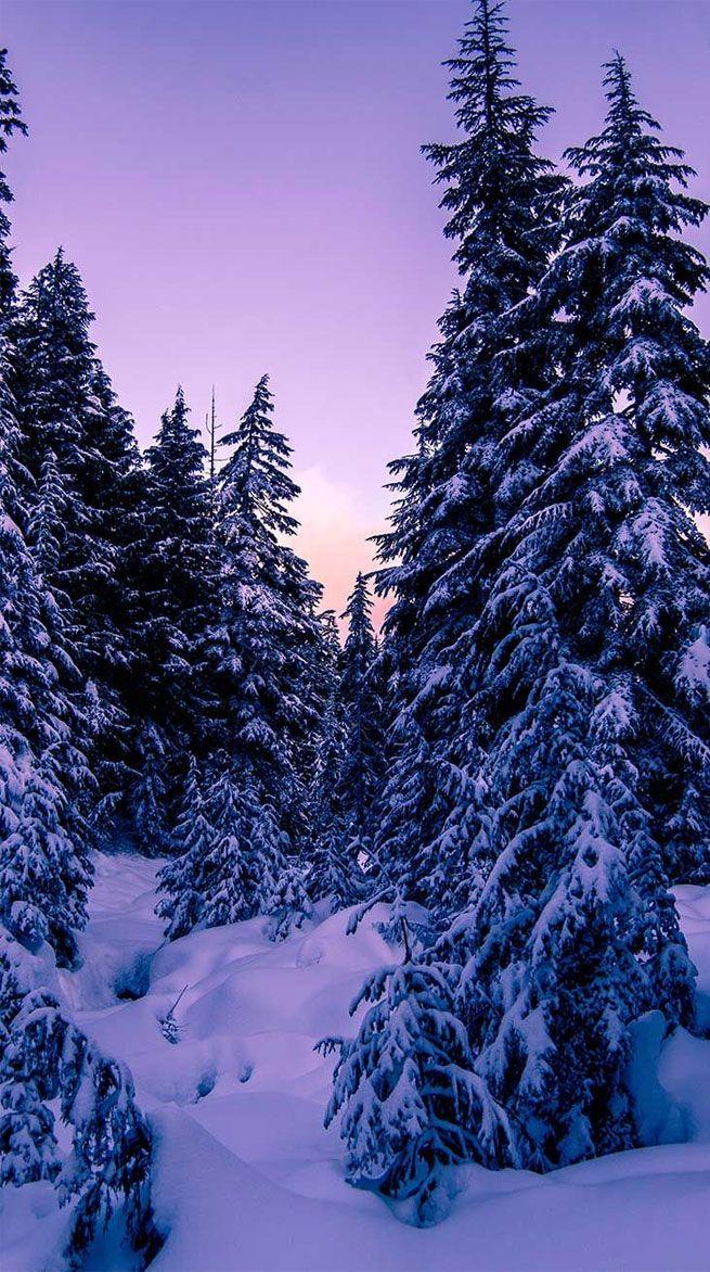 winter snow winter aesthetic winter winter landscape