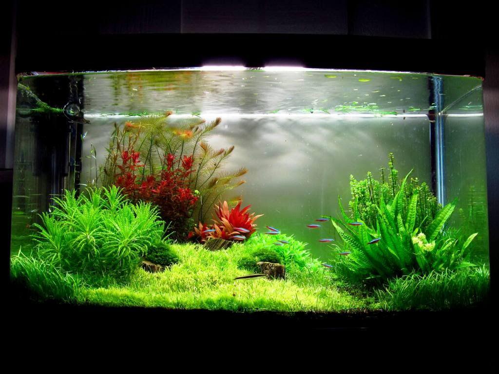 Freshwater aquarium fish massachusetts -