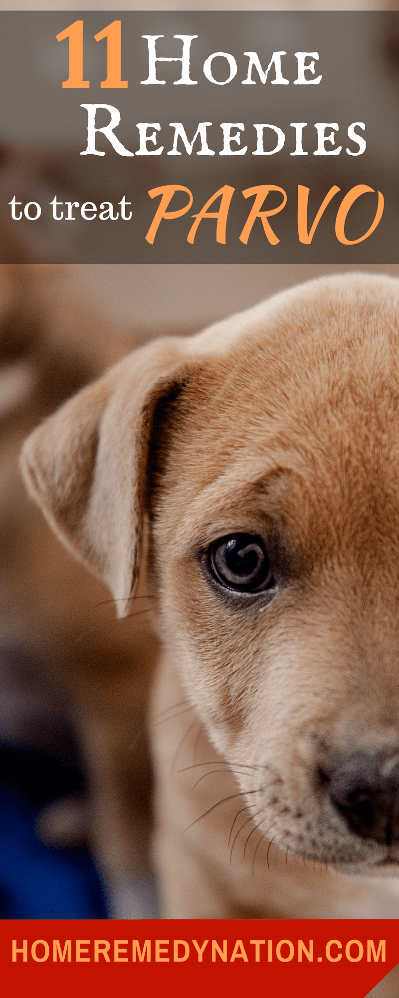 11 Home Remedies To Treat Parvo In Dogs And Puppies Proven Cures Sick Dog Remedies Dog Remedies Parvo
