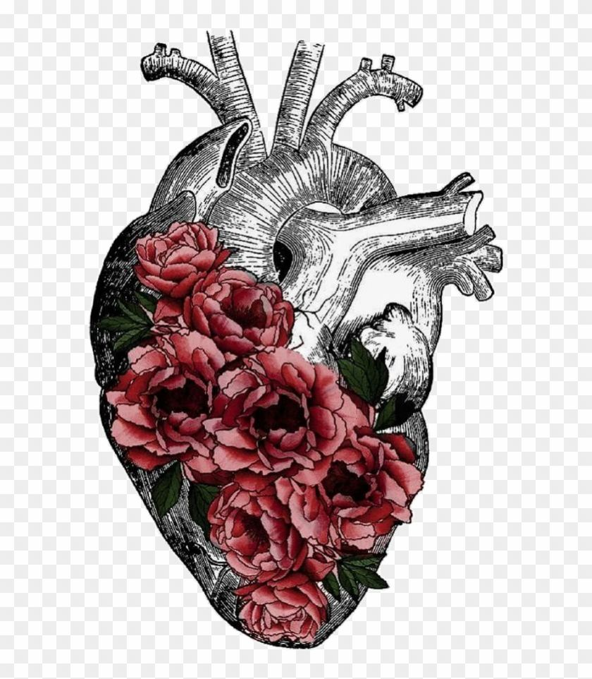 Replace Veins With Tree Roots Anatomy Art Heart Anatomy Anatomical Heart With Flowers Png Clipart Anatomical Heart Art Anatomy Art Anatomical Heart Drawing