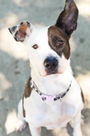 Humane Society Of Indianapolis Dog Profile Dogs Dog Rules