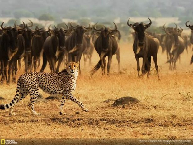Cool Photos: National Geographic's Traveler Contest - Photo Credit: April Badilles